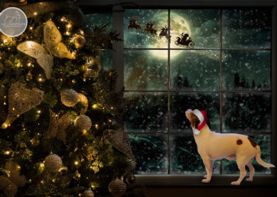 Christmas-WindowUSE1
